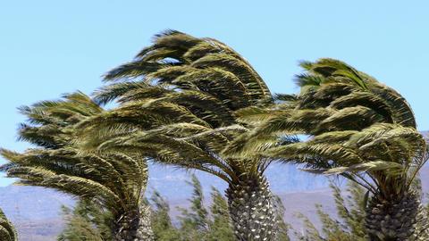 Palms and wind 영상물