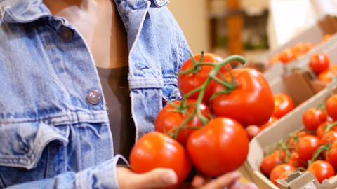Woman's white hands take few colorful tomatoes in marketplace and hold. Closeup Footage
