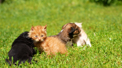 kittens and puppies are playing on the grass Footage