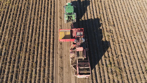 Harvesting potatoes in field Photo
