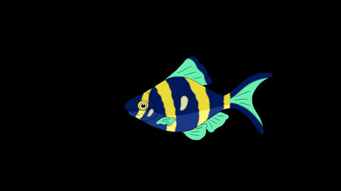 Blue- yellow Aquarium Fish Alpha Matte looped Animation