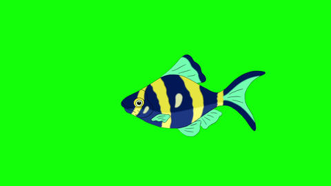 Blue-yellow Aquarium Fish Chroma Key looped, Stock Animation