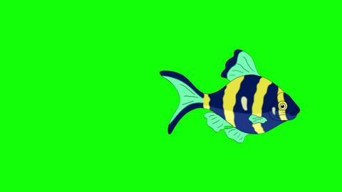 Blue-yellow Aquarium Fish Chroma Key looped Animation