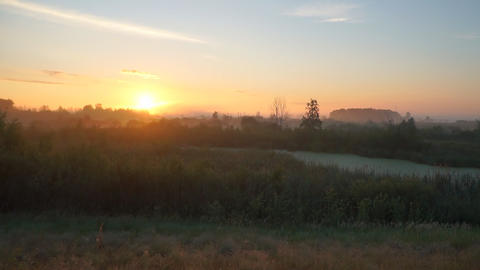 Sunrise over meadows on summer morning Live Action