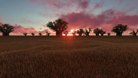 African Savanna Sunset Animation
