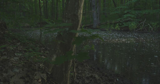 4K - A lake in a quiet morning forest, slow motion Footage