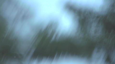 4K 水面に映る木々 ビデオ