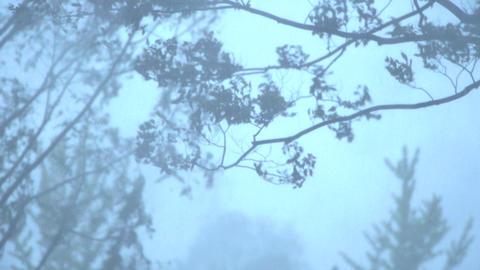 4K 風に揺れる枝 ビデオ