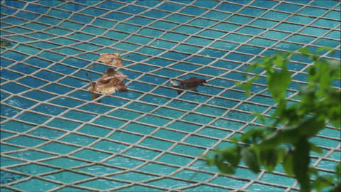 It is raining on net covered swimming pool Archivo