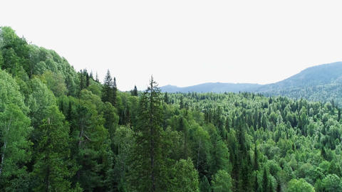 A view from above of wildlife. Panoramic view of the forest thicket in the Live Action