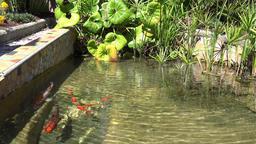 France Cote d'Azur Villefranche sur Mer gold fish pond in small park 영상물