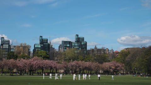 Time lapse of a cricket match in a park Footage