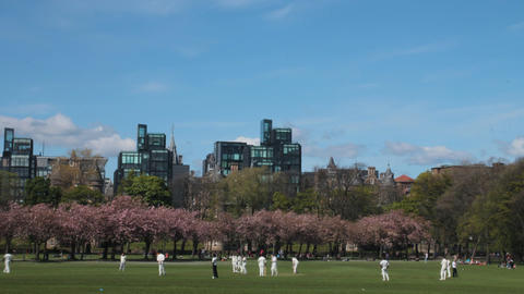 Time lapse of a cricket match in a park Stock Video Footage
