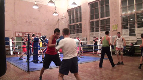 Boxers in training Stock Video Footage