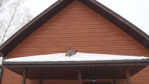 The cat is on the roof of a house Footage