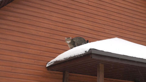 The cat is on the roof of a house Stock Video Footage