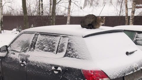 The cat on the roof of the car Footage