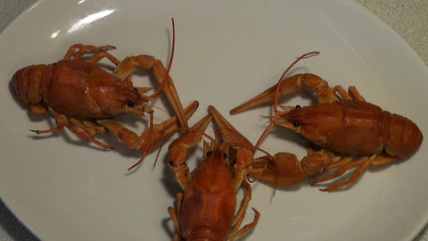 Boiled crayfish on the plate Stock Video Footage