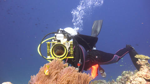 Underwater videographer, filming the symbiosis of clown fish and anemones Live Action