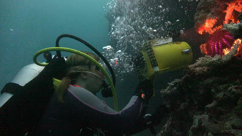 Underwater videographer shoots the starfish Footage