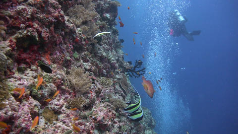 Picturesque colorful coral reef Footage