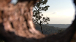 Forest View From Inside Bark Tree Zoom Out With Macro Effect stock footage