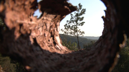 forest view from inside bark tree zoom out with macro effect Footage