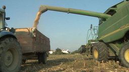Wheat Harvest Tractor Harvesting Wheat In The Field stock footage