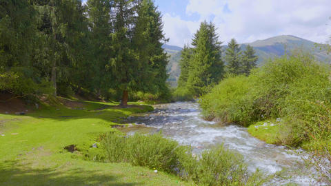 Landscape summer meadow and river in fir forest, green mountains on background ビデオ