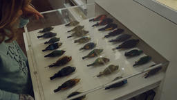 Little Girl Slides Out Shelves with Stuffed Birds and Insects 영상물