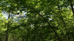Green Lush Spring Forest Footage