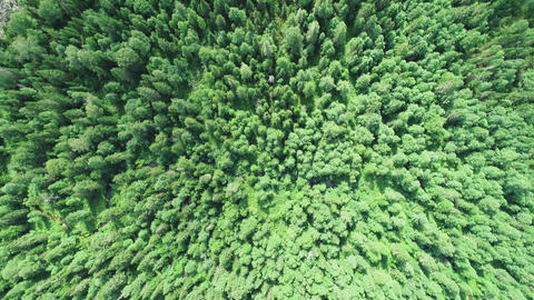A view from above of wildlife. Panoramic view of the forest thicket in the ビデオ
