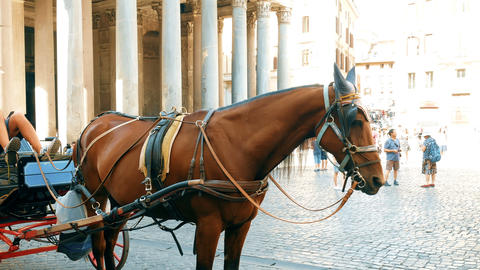 horse and carriage transporting tourists in the Pantheon square, Rome Footage