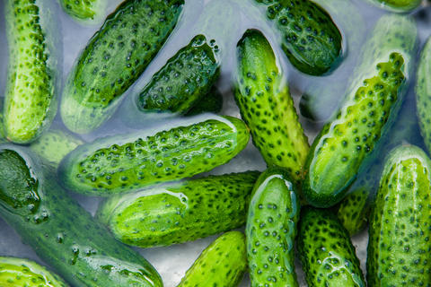 Cucumbers in water, Cucumbers ready for pickling and canning produce フォト