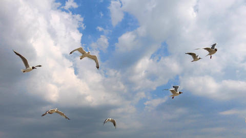 flying white sea gulls high in the sky against a background of clouds, summer Archivo