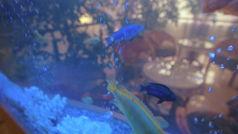 Aquarium Fish in Water Underwater Footage