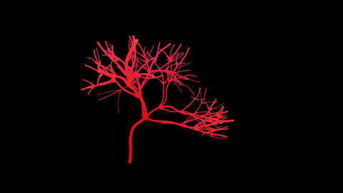 Nerves, neurons growing. 3d animation. Fractal network growth Animación