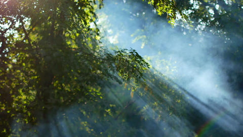 White smoke rises. Fire in the woods. Outdoor recreation. Summer time. The green Live Action