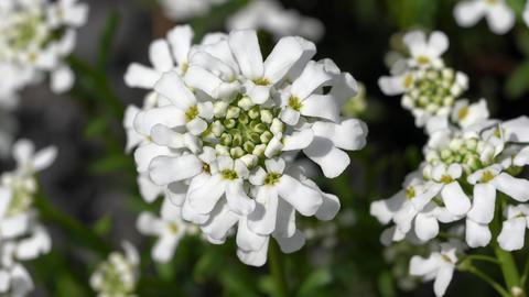 Flora - Plants Of Gardens 2