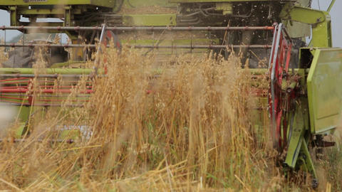 Combine mows cereals, camera to stem rising reaper Live Action