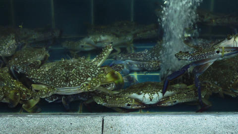 Several large green crabs are sitting in a tank Footage