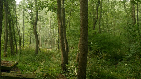 quiet early morning in forest Footage