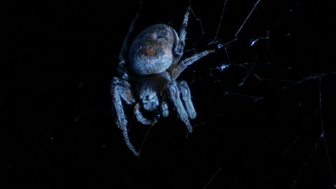 huge spider chews the jaws Live Action