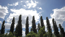 Cloudscape and Poplar Trees in Time-lapse Live Action