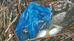 Dead fish and plastic bag. Water pollution Live Action