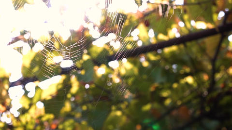 Spider web woven by a spider in the wind Footage