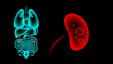 Human Female Organs X-ray set, Kidney infection concept idea red color CG動画素材