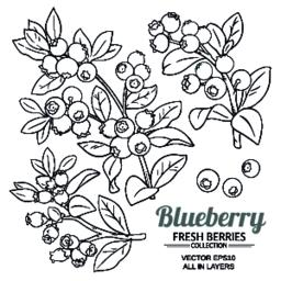 blueberry plant vector Vector