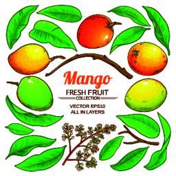 mango plant vector Vector