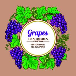 grapes vector frame Vector